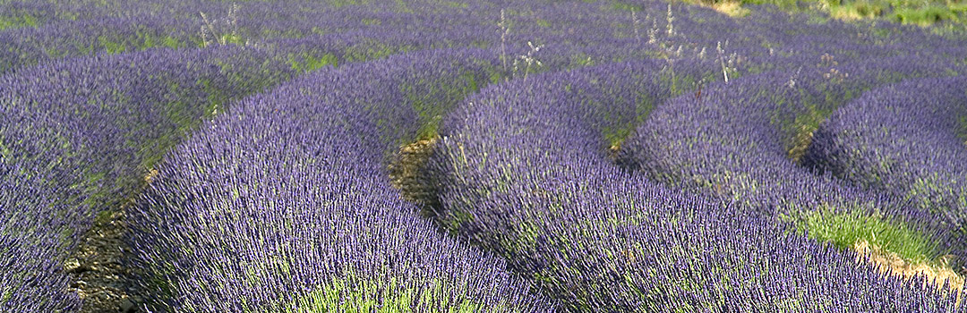 Provence039